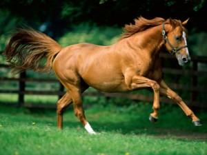 freddy-lowe-caballo