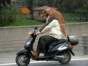 perro-en-scooter