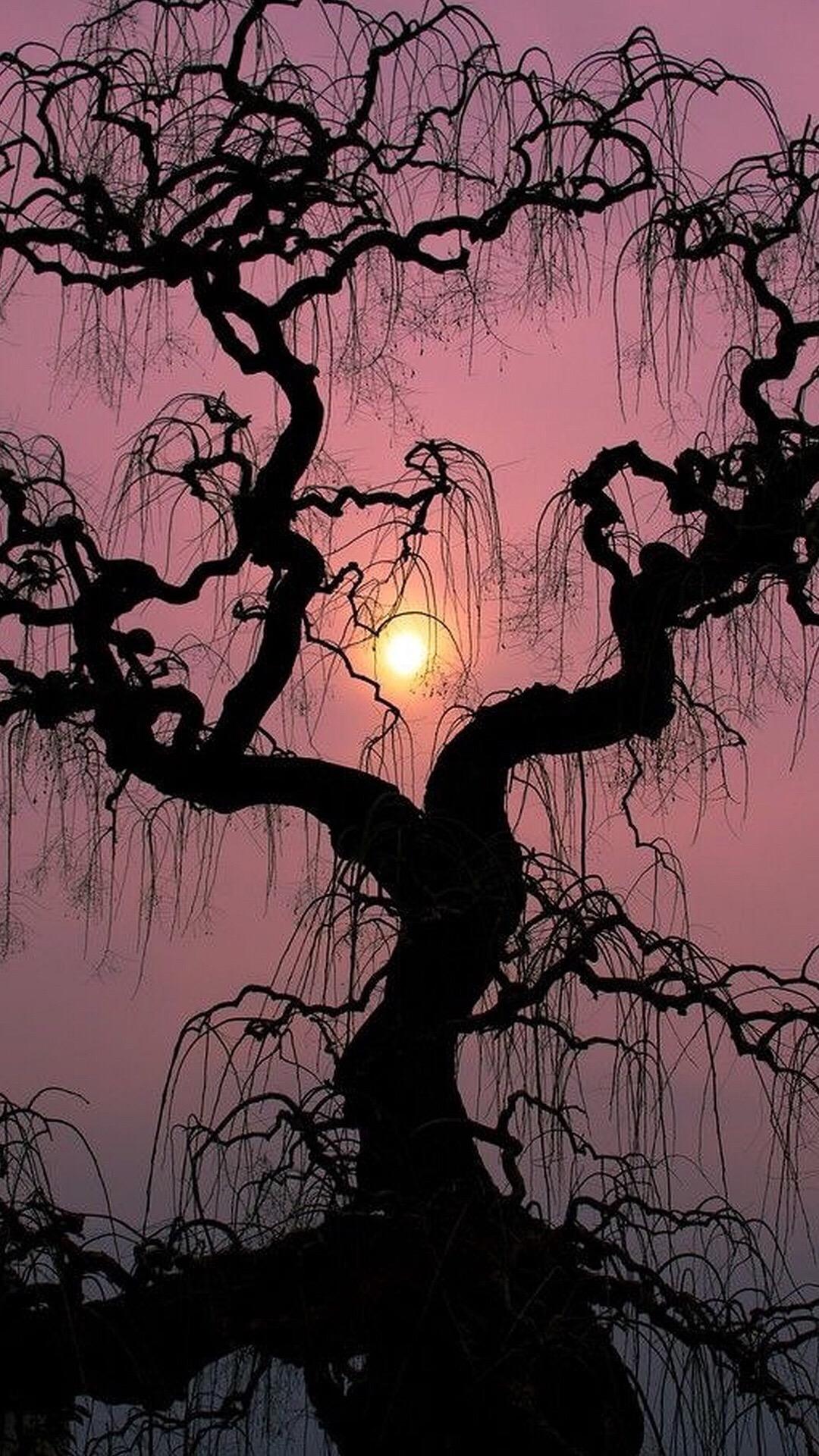 6 fondos de pantalla para iphone blog de sati for Beautiful drawings of trees